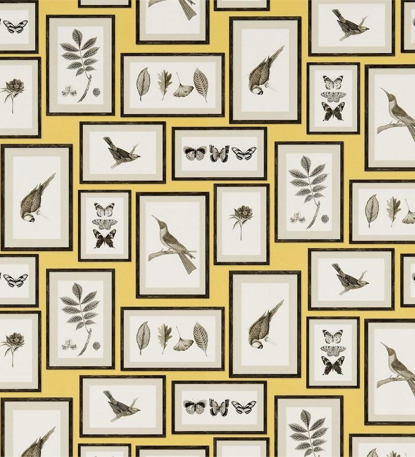 Papel pintado collage inglés de hojas y pájaros enmarcados Moray 565539