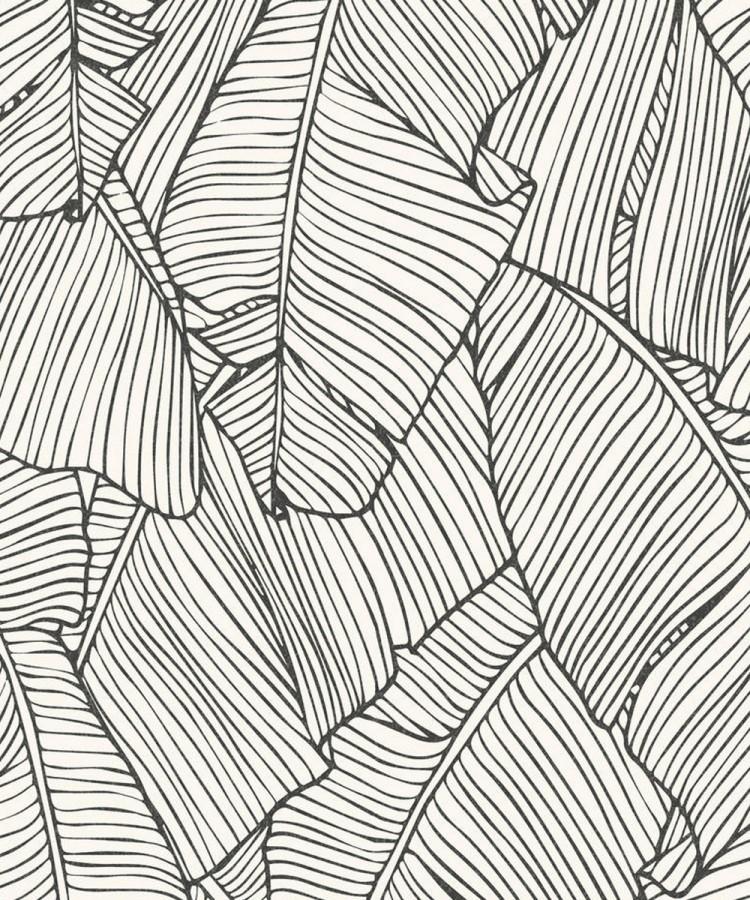Papel pintado hojas grandes modernas estilo tropical Medellin 121016