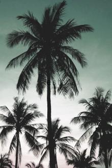 Fotomural Esta Home Jungle Fever