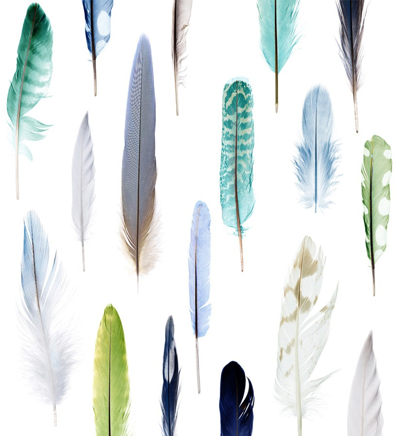 Papel pintado de plumas de colores Natural Wonder 677008
