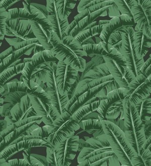 Papel pintado hojas de jungla estilo tropical Paipe Jungle 679028
