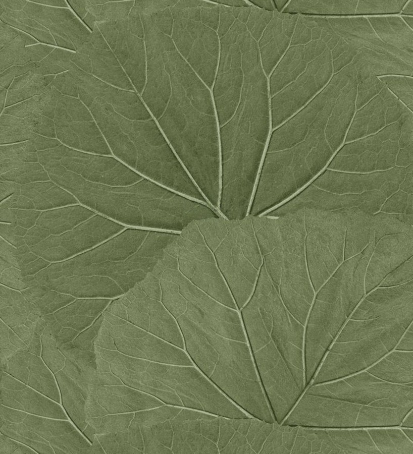 Papel pintado hojas grandes de la jungla Madagascar Nature 679038