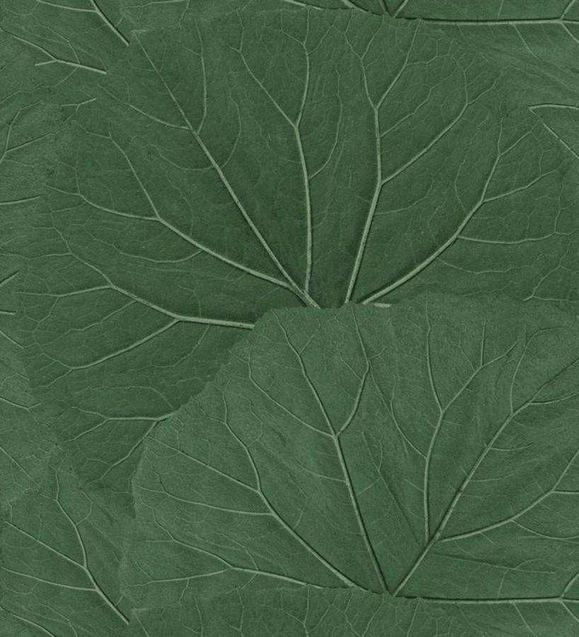 Papel pintado hojas grandes de la jungla Madagascar Nature 679039
