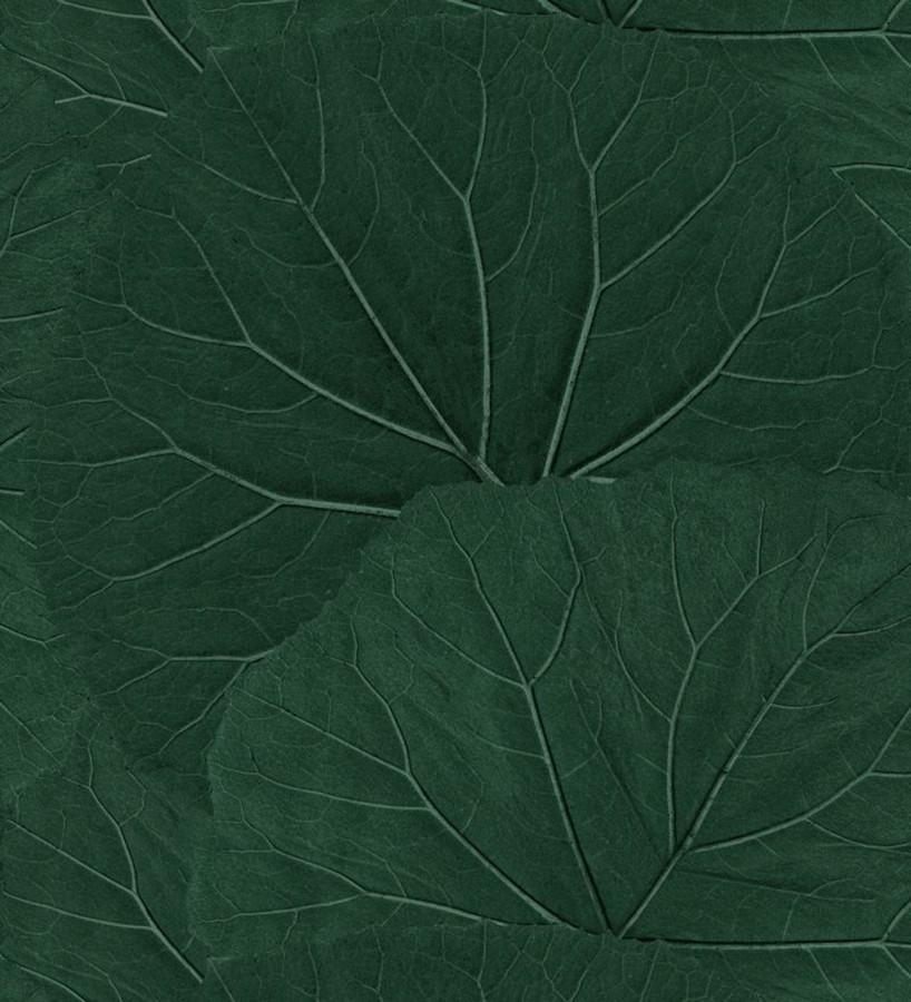 Papel pintado hojas grandes de la jungla Madagascar Nature 679040
