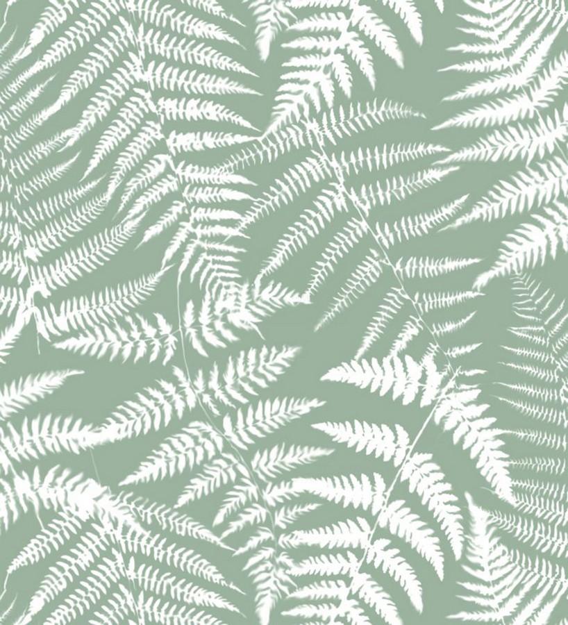 Papel pintado hojas de bosque tropical Boreal Forest 679041