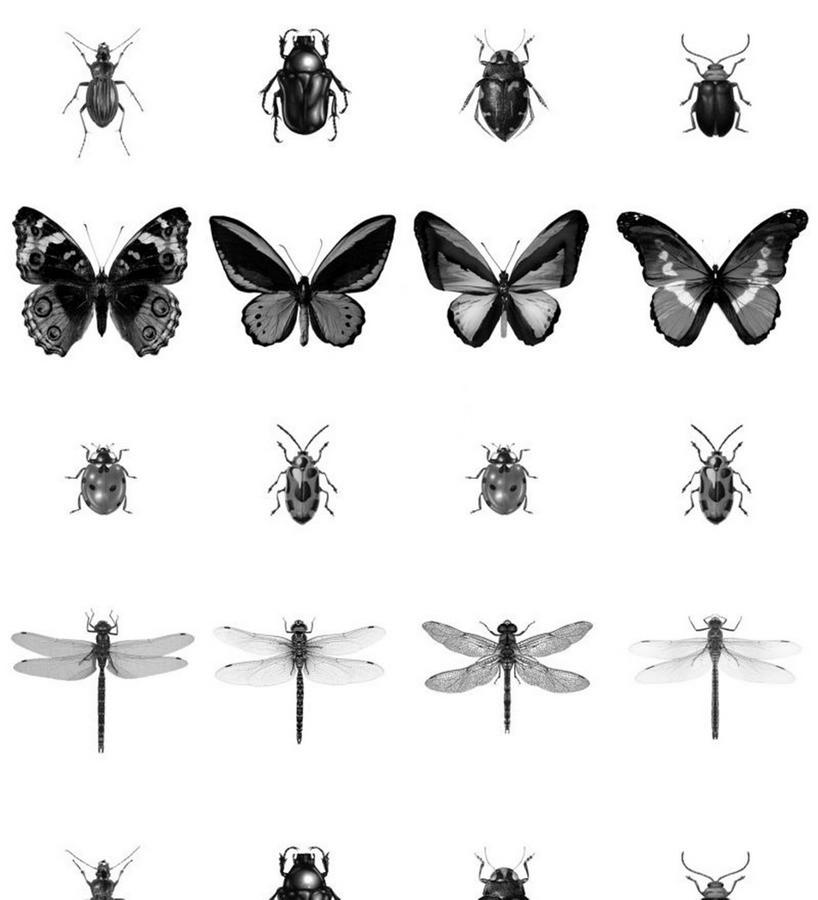 Papel pintado insectos blanco y negro Butterfly World 679080