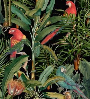 Papel pintado loros en las ramas de plantas tropicales fondo negro Cameron Island 128265